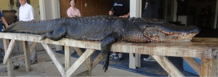 Cajun fishing and hunting charters louisiana alligator hunts for Louisiana lifetime hunting and fishing license